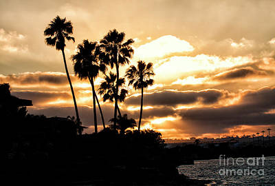 Photograph - Sunset Silhouette In San Diego  by Ruth Jolly