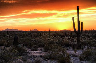 Photograph - Sunset Silhouette In The Sonoran  by Saija Lehtonen