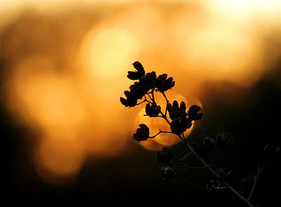 Photograph - Sunset Silhouette Of Foliage by Sarah Broadmeadow-Thomas