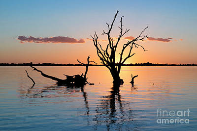 Photograph - Sunset Silhouette by Ray Warren