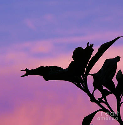 Photograph - Sunset Silhouette by Rose  Hill
