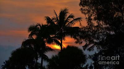 Photograph - Sunset Silhouettes  by Bob Sample
