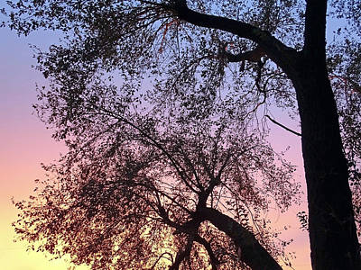 Photograph - Sunset Silouette by Mary Halpin