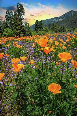 Photograph - Sunset Skies And Wildflowers At The Oak Glen Preserve by Lynn Bauer