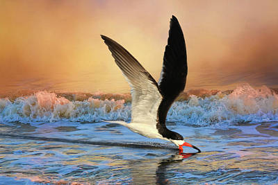 Black Skimmers Photograph - Sunset Skimming by Donna Kennedy