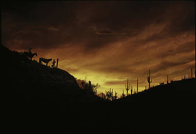 Human Beings Photograph - Sunset Sonoran Desert Tuscon Az by Panoramic Images