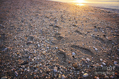 Photograph - Sunset Step by Paul Cammarata