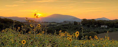 Sunset Sunflowers Art Print by Tommyscapes