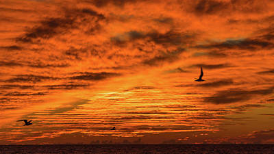 Photograph - Sunset Terns Venice Florida by Lawrence S Richardson Jr