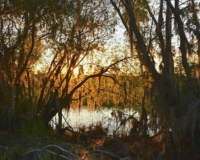 Photograph - Sunset Through A Curtain Of Spanish Moss by Carol Bradley