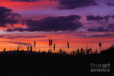 Ollivrosa Wall Art - Photograph - Sunset Through The Cattails by Amy Sorvillo