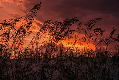 Sunset Through The Sea Oats Art Print by Zina Stromberg