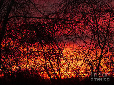 Digital Art - Sunset Through The Tangle by Dee Flouton