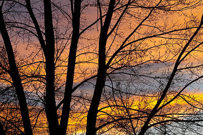 Sunset Through The Tree Silhouette Art Print by James BO  Insogna