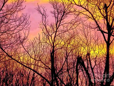 Photograph - Sunset Through The Trees by Craig Walters