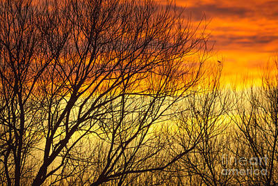 Photograph - Sunset Through The Trees by Paul Farnfield