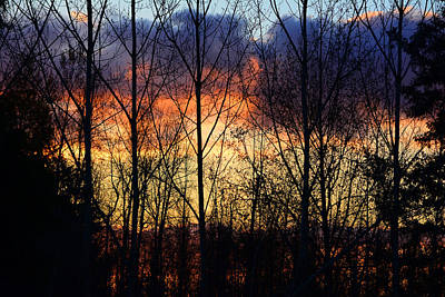 Photograph - Sunset Through The Trees by Theresa Pausch