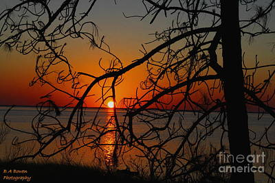 Photograph - Sunset Through The Winding Pine by Barbara Bowen