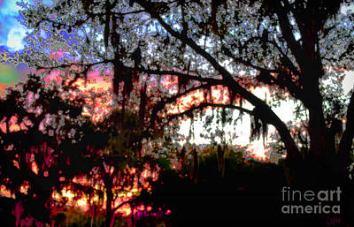 Photograph - Sunset Through Treelace by Expressionistart studio Priscilla Batzell
