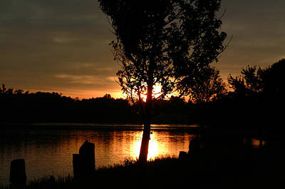 Photograph - Sunset Through Trees by T F McDonald