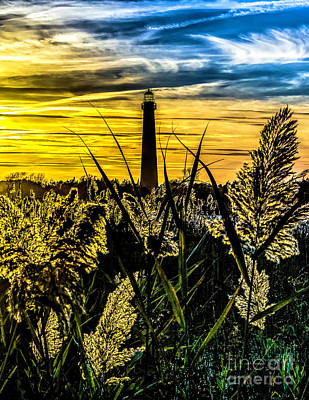Photograph - Sunset Thru The Reeds At Cape May  Light by Nick Zelinsky