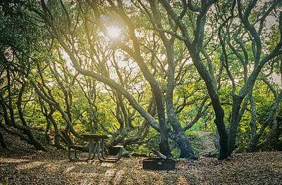 Photograph - Sunset Thru The Trees by Scott Meyer