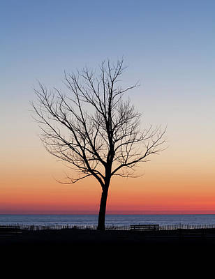 Photograph - Sunset Tree by Fran Riley