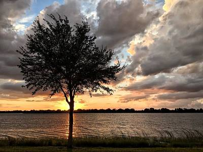 Photograph - Sunset Tree by Juan Montalvo