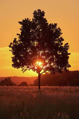 Sunset Tree Art Print by Marc Huebner