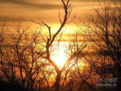 Photograph - Sunset Tree by Melissa Stoudt