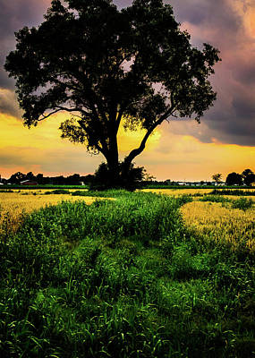 Photograph - Sunset Tree by Michael Arend