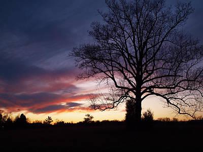 Sunset Tree Art Print by Michael Edwards