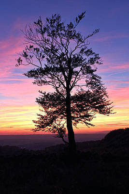 Photograph - Sunset Tree by RKAB Works