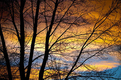Sunset Tree Silhouette Art Print by James BO  Insogna