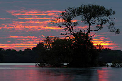 Travel Rights Managed Images - Sunset Tree Royalty-Free Image by Tom Whelton