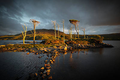 Photograph - Sunset Trees by Avril Christophe