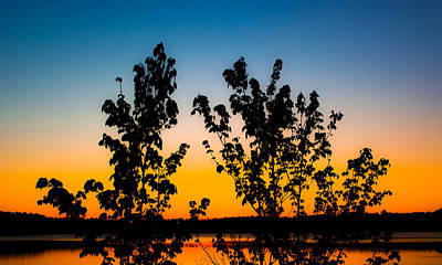 Photograph - Sunset Trees by Shelby Young