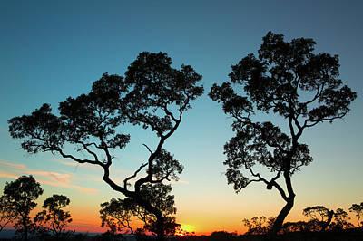 sunset tropical tree savanna Bolivia Art Print by Dirk Ercken