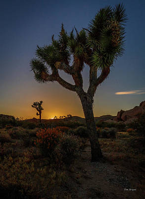 Photograph - Sunset Under The Joshua Tree by Tim Bryan