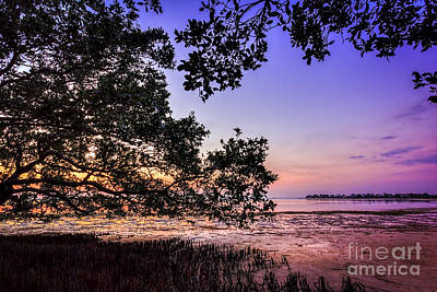 Sunset Under The Mangroves Art Print
