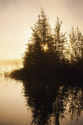Vintage Pharmacy Royalty Free Images - Sunset View Of Trees Reflected In Chena Royalty-Free Image by Remsberg Inc
