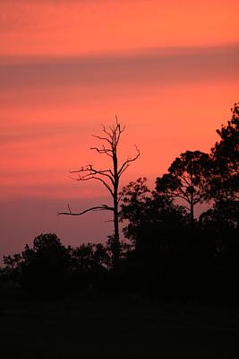 Sunset Art Print by Walt Reece