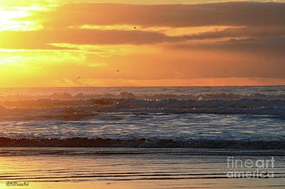 Photograph - Sunset Waves And Birds by Debby Pueschel