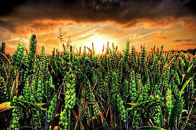 Sunset Wheat Print by Meirion Matthias