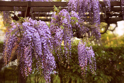 Photograph - Sunset Wisteria by Jessica Jenney