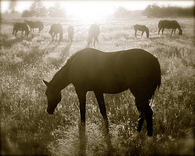 Photograph - Sunset With Band Of Horses by Kate Purdy