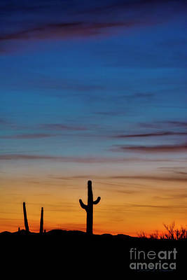 Photograph - Sunset With Cactus Vertical by David Arment