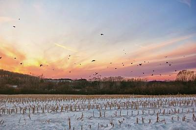 Photograph - Sunset With Crows by Marvin Borst
