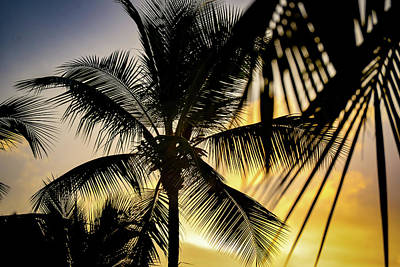 Modern Man Surf - Sunset with Palms by Rachel Cohen