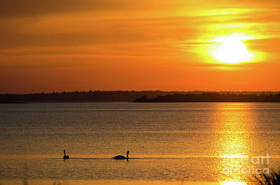 Photograph - Sunset With Swan Silhouettes by Kennerth and Birgitta Kullman